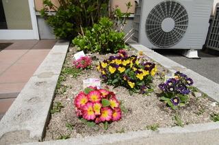 かなめの花.JPG